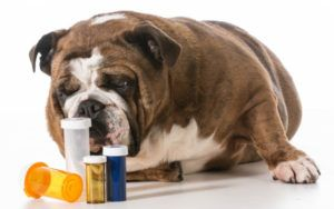 What To Do If Your Dog Eats Human Medication