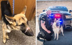 Scarred Dog Puts Abuse Behind Her and Joins Geary County Sheriff's K-9 Team