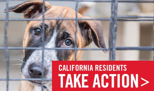 California: One More Step to End Sales of Puppy Mill Animals