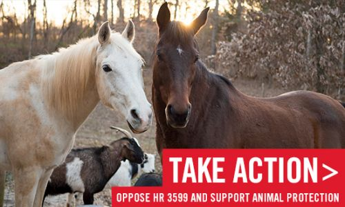 Take Action: Oppose HR 3599 and Support Animal Protection