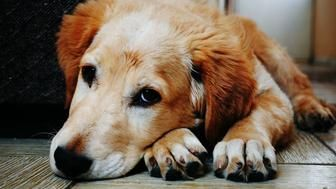 What To Give Your Very Good Dog This Holiday Season