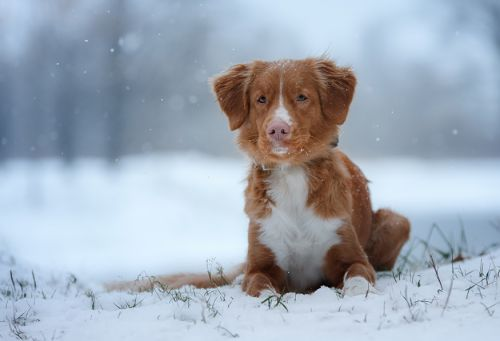 Cold Weather Canine Victims Need Justice