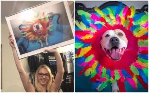 """Photo Series """"Cones Of Fame"""" Helps Homeless Dogs Get Adopted"""