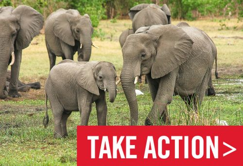 Urgent: Protect Wildlife from Trophy Hunters