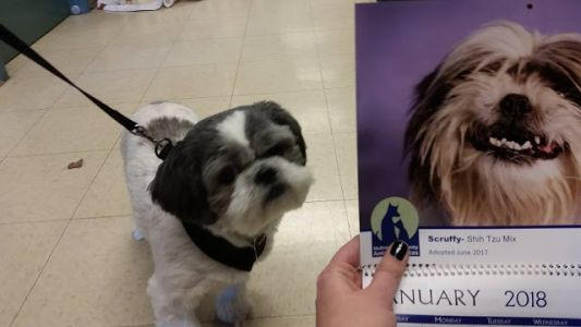 """SCRUFFY"" funny adoption update"
