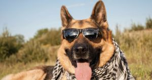 Top Dog Names Of 2020 Follow Amusing And Unusual Trends