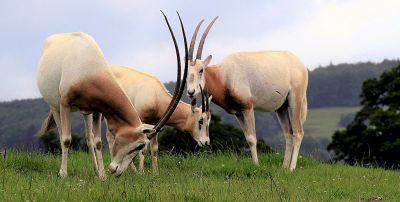 Animal Legal Defense Fund Puts Texas Canned Hunting Operations in the Cross Hairs