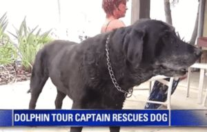 Dolphin Tour Captain Saves Senior Dog From Drowning In Ocean