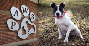 Kind Couple Pays All Adoption Fees At Tennessee Shelter