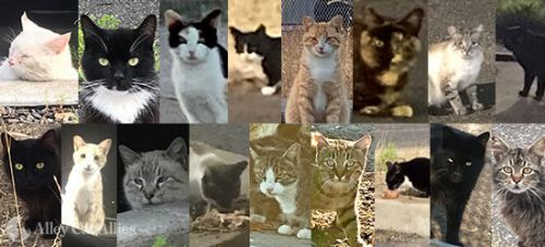 Fighting for Justice for the Cat Victims of the Oakland Park Shootings