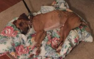 Lost Dog Found Making Himself At Home In A Stranger's House