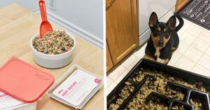 I Fed My Rescue Dog Ollie For 30 Days And The Difference It Made Is Incredible