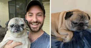 Millions Rely On This Sassy Senior Pug To Predict How Their Day Will Go