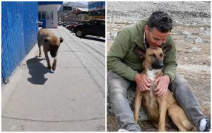 Stunt Performer Steve-O Befriends A Street Dog & Can't Go Home Without Her