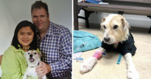 Man & The Dog Who Saved His Life In The Strangest Way Die Just Months Apart