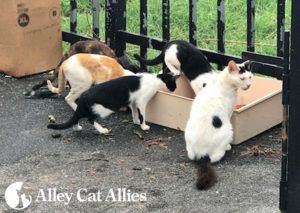 Alley Cat Allies Grant Aids Cats as Recovery from Hurricanes Continues