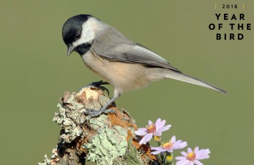 A Yard Full of Native Plants Is a Yard Full of Well-Fed Birds