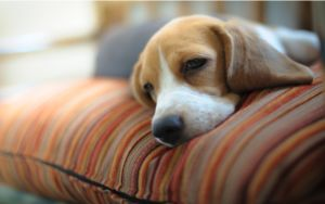 What You Need To Know About Kidney Infections In Dogs