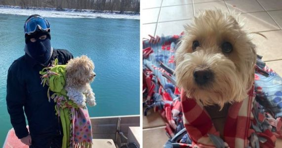 Tiny Dog Stranded on Icy River For 4 Days Gets Adopted by His Rescuer