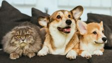 How To Prepare For Your Pets In Case Of A Coronavirus Emergency
