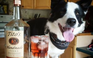 "Vodka Company Encourages Pet Lovers To Get In The ""Spirit"" Of Giving"