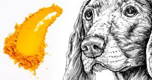 6 Compelling Reasons To Give Your Senior Dog Turmeric Daily
