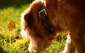 What Is Nose Work And How Can It Help Senior Dogs Stay Mentally Healthy?