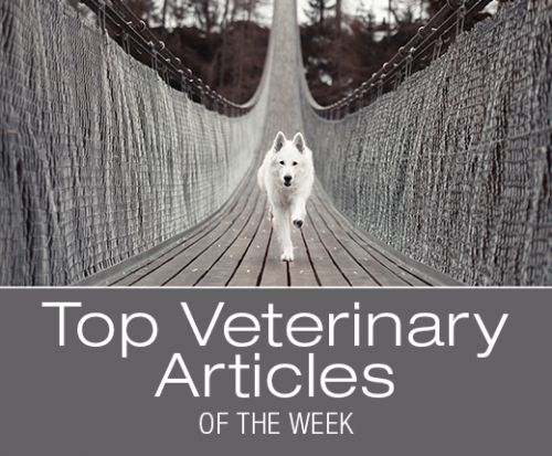 Top Veterinary Articles of the Week: Signs of Heat Stroke, CBD Oil for Dogs, and more