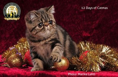 The Twelve Days of Catmas, part 2