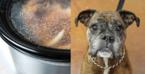 Why Bone Broth is The Ultimate Superfood For Senior Dogs