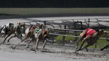 Thousands Of Ex-Racing Greyhounds Will Need Homes Soon. Here's How To Help