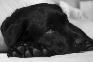 Contagious Strain Of Dog Influenza Reported In Connecticut