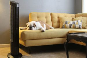 Is Your Dog Overweight? Here's What You Need to Know