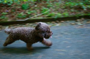 3 Strategies For Safely Catching A Loose Dog