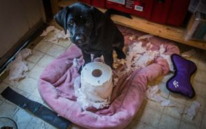Why Do Some Dogs Love To Shred Paper?
