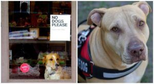 """Woman Posts Powerful Message About The Damage """"Fake"""" Service Dogs Can Cause"""