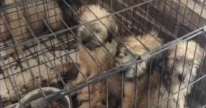 Suspected Puppy Mill with 80 Dogs Found in Virginia