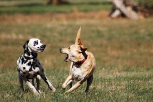 How To Teach Your Dog To Play Nice With Other Dogs