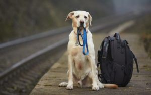 11 Tips To Help You Find Your Lost Dog Faster