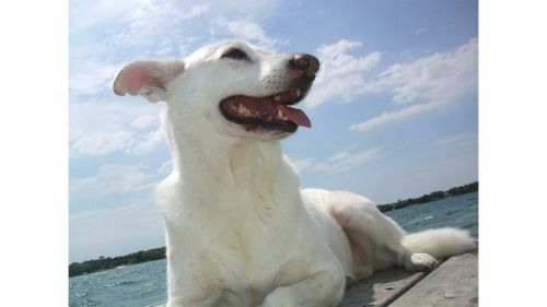 Approximately 15 years ago, I adopted a 1-year-old white pup