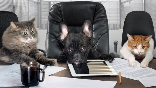 Telemedicine at Work - A Veterinarian's Perspective