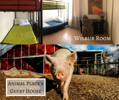 Meet Wilbur the pig-the namesake of the Guest House's