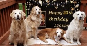 20-Year-Old Dog Becomes World's Oldest Golden Retriever