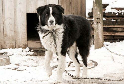 Washington, D.C., Enacts Legislation to Protect Companion Animals in Cold Weather