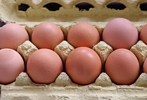 Animal Legal Defense Fund Announces Resolution in Egg Labeling Lawsuit Against Handsome Brook Farm