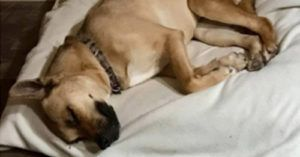 High-Risk Shelter Pleads for Help for Young Pup. Now He's Safe at Home!