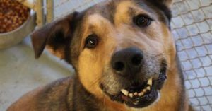 Rescue Dog Adopted After 2,381 Days in Shelter - Sometimes Dreams Do Come True