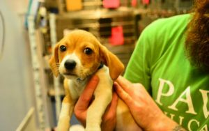 10 Misconceptions About Animal Shelters