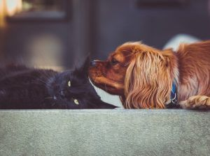 "What's The Difference Between ""Dog People"" And ""Cat People""?"
