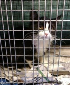 Saving Many a Kitty in West Virginia